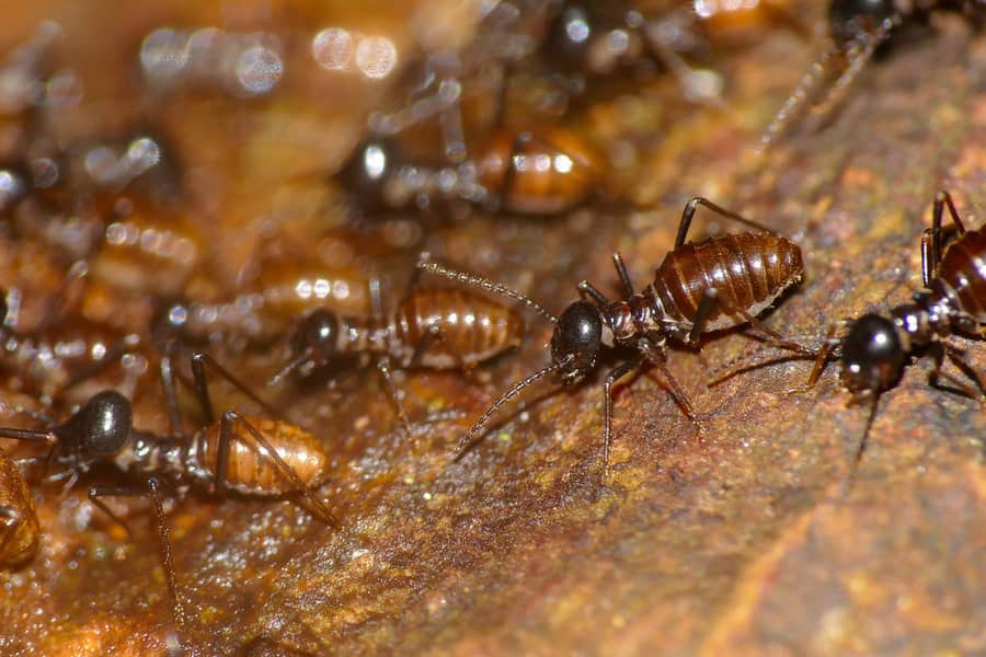 What to do if you find termites in your apartment - 1