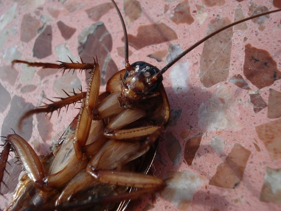 Where do cockroaches come from in apartments - 1