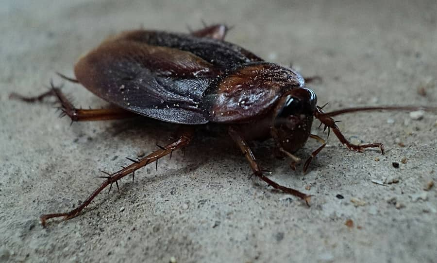 Why do I have roaches in my clean apartment - 1