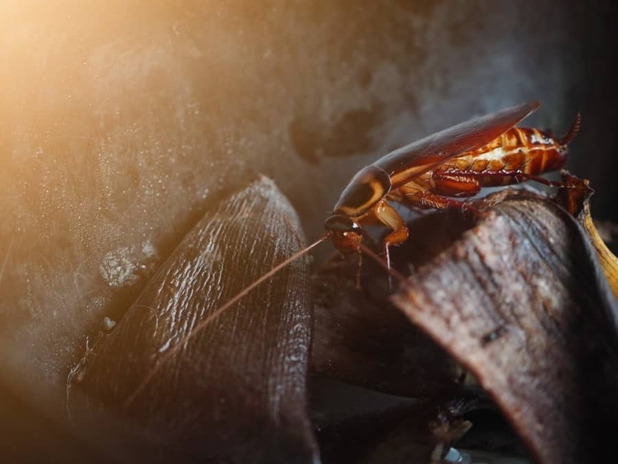 Do Roaches Travel From Apartment to Apartment? - Apartment ABC