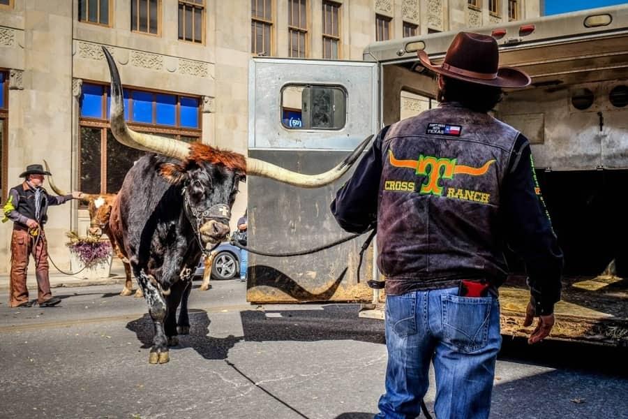 Western heritage parade in San Antonio Texas with Cowboys and Longhorns